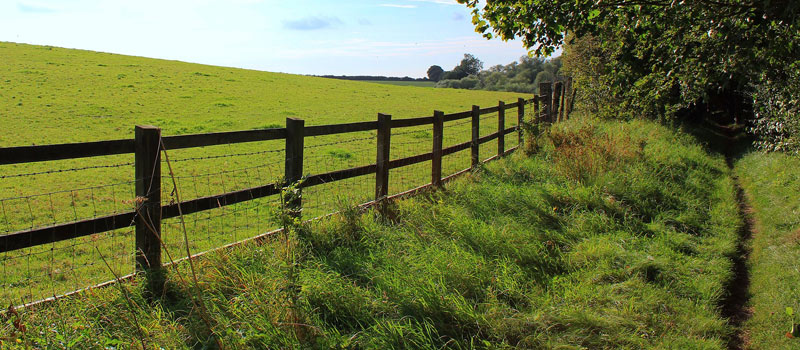 Fence Line Clearing Services | Patriot Site Pros Commercial Land Clearing & Mulching
