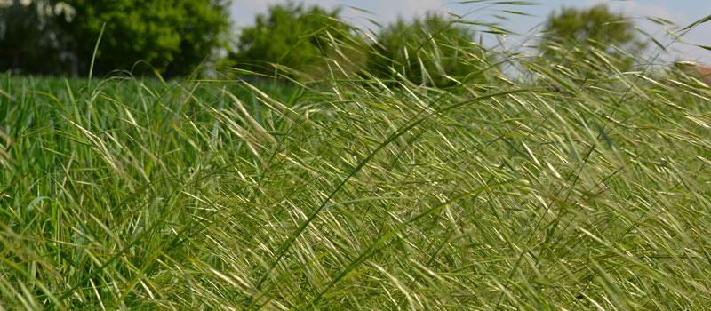 Roadside Vegetation Management | Patriot Site Pros Commercial Land Clearing & Mulching